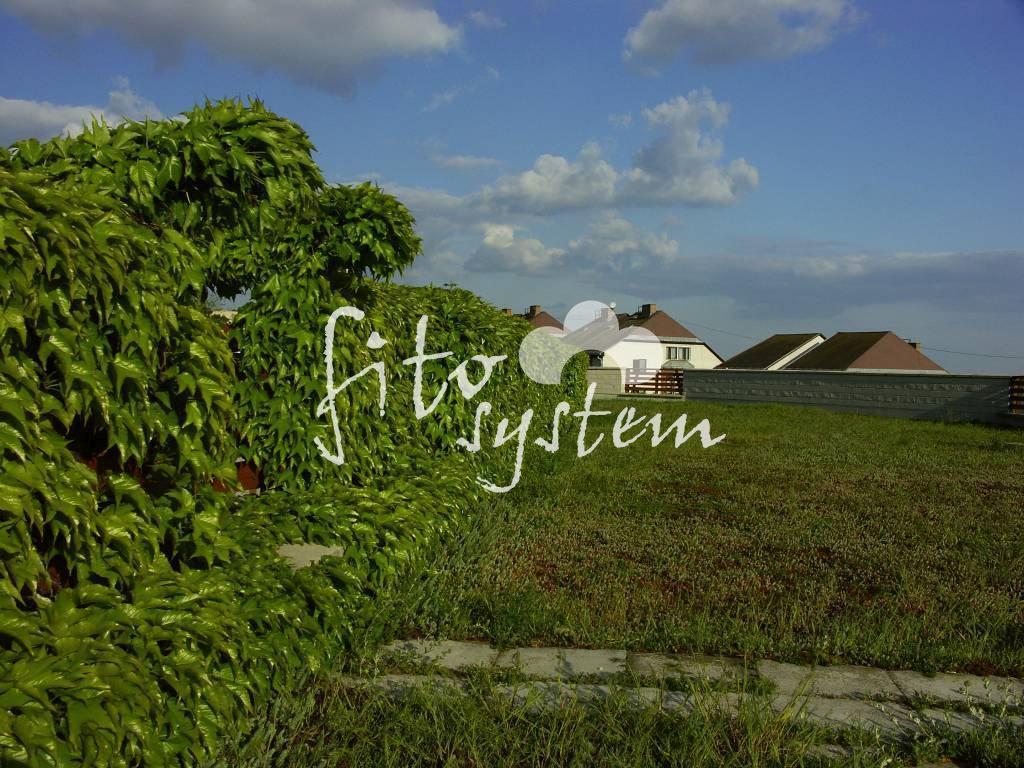 Budapest Appartmanház - Fito System - extenzív zöldtető
