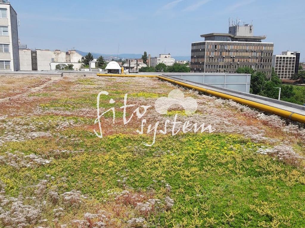 Budapest Iroda - Fito System - extenzív zöldtető