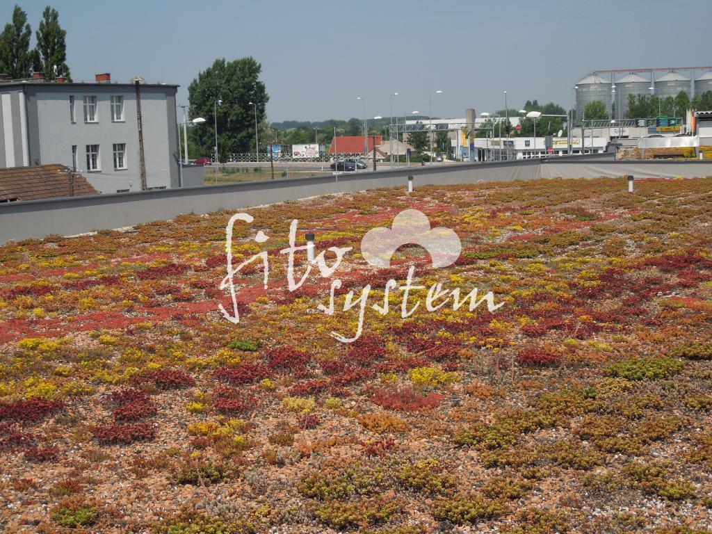Győr Üzletház - Fito System - extenzív zöldtető
